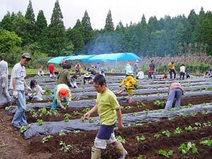 芋植え体験